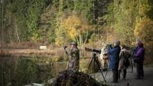 Visitors stop near a beaver lodge to photograph wildlife at Beaver Lake in Vancouver's Stanley Park. (Rafal Gerszak for the Globe and Mail)