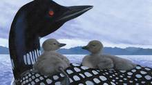 """Detail of an image from the children's book """"Loon"""" (Groundwood Books)"""