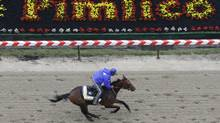 2009 Kentucky Derby winner Mine That Bird, shown exercising at Pimlico Race Course (Rob Carr/AP)