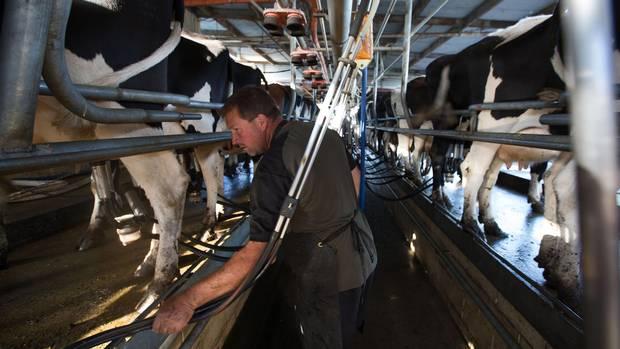 Dairy Farming in New Zealand New Zealand Dairy Exporter