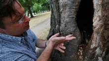 Philip van Wassenaer, an Arborist with Urban Forest Innovations Inc. talks about the beetle he found in the heritage tree, a 150-200 year old Red Oak tree at Queen's Park in Toronto. (Deborah Baic/The Globe and Mail)
