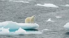Polar bears are an international symbol of Canada and a barometer for what is happening in the climate-sensitive North. And according to wildlife experts now monitoring the impact of global warming in greater detail, the big bears aren't as big as they used to be. (Thinkstock)