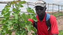 A Montreal-based company called Carbon2Green which is planting 35 million jatropha trees on 14,000 hectares in Congo.
