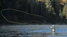 "B.C's famous steelhead are known as ""the fish of a thousand casts,"" and are pursued by anglers from around the world. (Ken Morrish)"