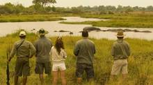 Taking in the view – of hippos – in Zimbabwe. (African Bush Camps)