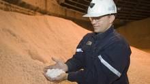 Trevor Berg holds some potash chiclets in a storage building at the Potash Cory mine near Saskatoon (Liam Richards/Photo Liam Richards)