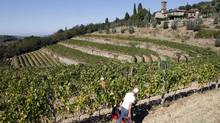 The grape harvest at a Tuscan vineyard south of Florence, part of the Chianti subregion that can produce wines labelled Chianti Classico. (Giampiero Sposito/Reuters)
