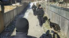 Police officers with a dog walk through the yards around townhouse units near Ardglen Drive in Brampton on Jan. 24, 2013 . (Peter Power/The Globe and Mail)