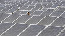 An employee from the Electrical Manufacturing Company Ltd. (EMC) walks through the installed solar modules at the Naini solar power plant in the northern Indian city of Allahabad March 21, 2012. (JITENDRA PRAKASH/REUTERS)