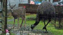 Lucy the emu, with friend Mojo, in an image provided by owner Tim Genner.