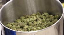 Cured flowers of cannabis intended for the medical marijuana market are seen at a licensed producer facility in Moncton, N.B., on April 14, 2016. (Ron Ward/THE CANADIAN PRESS)
