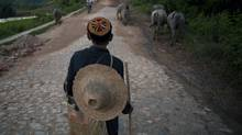 A herder from the Lahu minority drives his water buffalo through Mangmei village near Mending, Yunnan Province, China on June 9, 2011. Sino-Forest owns much of the forest land around Mangmei. (Adam Dean/Adam Dean for The Globe and Mail)