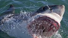 Every program on the Shark Week schedule seems to be selling you something. (Chris Fallows/Discovery Channel)