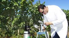 Brock University viticulturist Jim Willwerth measures leaf stress in a Niagara, Ontario, vineyard.
