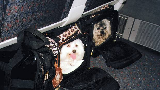 How do i make my dog comfortable on a plane the globe for Best airline to fly dogs