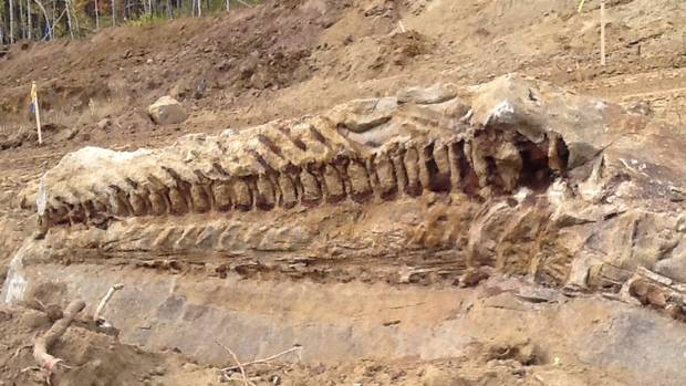 "Paleontologists are busy in northwestern Alberta after a pipeline crew uncovered a fossil of a dinosaur. The fossil skeleton is of the creature's tail, and experts believe the prehistoric beast may have been up to 10 metres in size. Paleontologist Matthew Vavrek calls the find this week near Spirit River ""a significant fossil discovery."" He said the challenge now is to carefully recover the fossil and perhaps find other parts to help determine the type of dinosaur. (THE CANADIAN PRESS)"