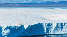Polar Bear on tabular iceberg, Isabella Bay, Baffin Bay, Baffin Island, Nunavut, Canada. (Ralph Lee Hopkins)