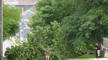 Dartmouth, N.S. residents examine a tree that has toppled onto power lines by tropical storm Arthur on Saturday July 5, 2014. (Catherine Tutton/THE CANADIAN PRESS)