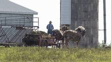 An Amish farmer drives a wagon in Summerville, P.E.I., on Saturday, Oct. 8, 2016. Over the past year, eastern Prince Edward Island has become a bit of an Amish paradise, and Islanders are welcoming the new settlers with open arms. (Andrew Vaughan/THE CANADIAN PRESS)