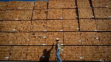 Douglas fir posts at the Interfor mill in Delta, B.C. In July, the value of B.C. exports of softwood lumber to the United States surged to $216.8-million, up 61.1 per cent from the same month last year. (DARRYL DYCK for The Globe and Mail)