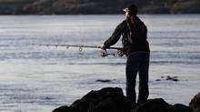 A man fishes from the shorline in Oak Bay a municipality of Victoria, BC.
