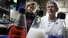 Scientists and couple Corey Nislow, right, and Guri Giaever, in this 2009 file photo, moved to Canada from Stanford University in the U.S. in 2006. They got lab jobs at the University of Toronto. (Peter Power/Peter Power/The Globe and Mail)