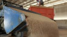 Agribusiness Cargill saw lower profits at its U.S. meat processing operations in the third quarter of 2012 as a drought drove up grain prices. (EDUARD KORNIYENKO/EDUARD KORNIYENKO/REUTERS)
