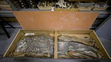 Museum officials said the complete human skeleton had been stored in a coffin-like box but with no trace of identifying documentation. (Matt Rourke/Associated Press)