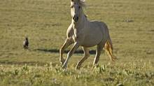 "SCIENCE: Nature (PBS, 8 p.m. ET/PT) Welcome to the latest chapter in the life of Cloud. Cited by NBC's Today Show as the ""most famous wild horse in the world,"" the white stallion's life has been regularly documented since his birth in the wild was recorded by filmmaker Ginger Kathrens in a 1995 episode of Nature. Tonight's episode takes viewers back to the majestic Arrowhead mountains of Montana, where Cloud's son, Bolder, has been nurtured by a gentle older stallion called Shaman, a rival band stallion. The film also shows how Cloud and his horsey brethren are dealing with the ongoing efforts of the federal government to curb the stallion population in the region."