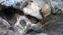 This 2005 photo provided by the journal Science shows a pre-human skull found in the ground at the medieval village Dmanisi, Georgia. The discovery of the estimated 1.8-million-year-old skull of a human ancestor captures early human evolution on the move in a vivid snapshot and indicates our family tree may have fewer branches than originally thought, scientists say. It is the most complete ancient hominid skull found to date, as well as the earliest evidence of human ancestors moving out of Africa and spreading north to the rest of the world.