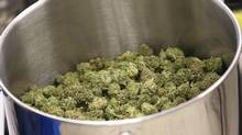 Cured flowers of cannabis intended for the medical marijuana market are seen at a facility on April 14, 2016. (Ron Ward/THE CANADIAN PRESS)