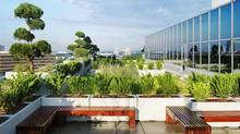 Early morning sun lights up the ESRI Canada rooftop garden in Toronto designed by landscape architect Scott Torrance. (Margaret Mulligan/Margaret Mulligan/ESRI Canada)