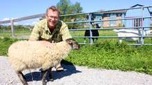Todd Royer, a teacher at Toronto Waldorf School, with animals on the school's property. (Courtesy Todd Royer)