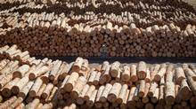 Logs wait to be processed at a B.C. mill in 2012. (Darryl Dyck for The Globe and Mail)