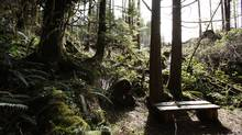 A wooden bench sits in the forest on the land where the Marine Trails Cabin Resort development was to be built, near the Juan de Fuca Trail above Bear Beach. Deddeda Stemler for The Globe and Mail (Deddeda Stemler For The Globe and Mail)