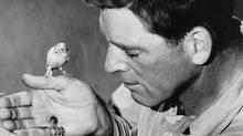Burt Lancaster as Robert Stroud in The Birdman of Alcatraz.