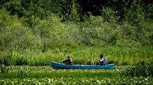 Two people paddle a canoe on Burnaby Lake in Burnaby, B.C. (DARRYL DYCK/THE CANADIAN PRESS)