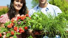 Gardening in summer - couple with herbs and flowers (kzenon/Getty Images/iStockphoto)