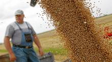 But bad weather in major wheat producing regions ? heavy rain in Saskatchewan, severe hot and dry weather in Russia and Kazakhstan ? has stirred buying interest among investors. (LASZLO BALOGH/REUTERS)