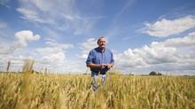 Allen Oberg, chair of Canadian Wheat Board walks through one of his wheat fields, near Forestburg, Alberta on Aug. 19, 2011. (John Ulan/The Globe and Mail/John Ulan/The Globe and Mail)