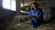 A small movement of seed farmers across Canada is building a domestic industry to provide consumers with choice. (For the Globe and Mail/Graham Hughes)