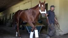 Kentucky Derby and Preakness winner I'll Have Another is lead around his stable just after arriving at Belmont Park in New York, Sunday, May 20, 2012. (Seth Wenig/AP/Seth Wenig/AP)