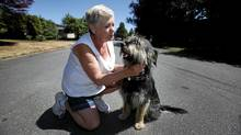 Barb Sharp sits with her rescue dog, Norton on the residential street where they were both attacked by a mother deer protecting her three young fawns in Saanich near Victoria, BC. (Deddeda Stemler For The Globe and Mail/Deddeda Stemler For The Globe and Mail)