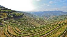 The Douro region is be a good starting place: It's the spiritual home of Portugal's favourite elixir – port. (iStockPhoto)