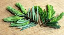 Grand fir tips (Deerholme Farm)
