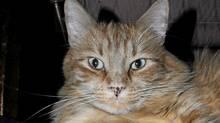 Orangie: Christy Ann Conlin's cat (family photo)