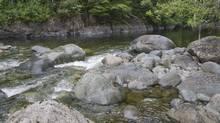 The Kokish River in British Columbia. (Tomas Jirku/Tomas Jirku)