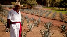 In this photo taken Sept. 23, 2011, a man dressed as an agave cutter, known as a jimador, welcomes tourist at the Tequila Herradura factory in Amatitan, Mexico. The green mountain valleys surrounding Tequila are spotted with fields of blue agave, the plant that is fermented to make the drink. (Bernardo De Niz/AP/CP)