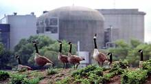 Canada geese stand near the Ontario Hydro Pickering nuclear power station, listed by a U.S. State Department cable as a site critical to American interests. (Andy Clark/Andy Clark/REUTERS)