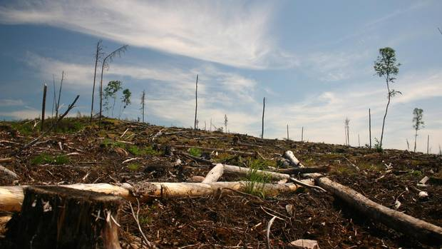 A clear cut section of forest is seen on Grassy Narrows First Nation territory near Dryden, Ont., in this 2006 handout image. (HO/THE CANADIAN PRESS)